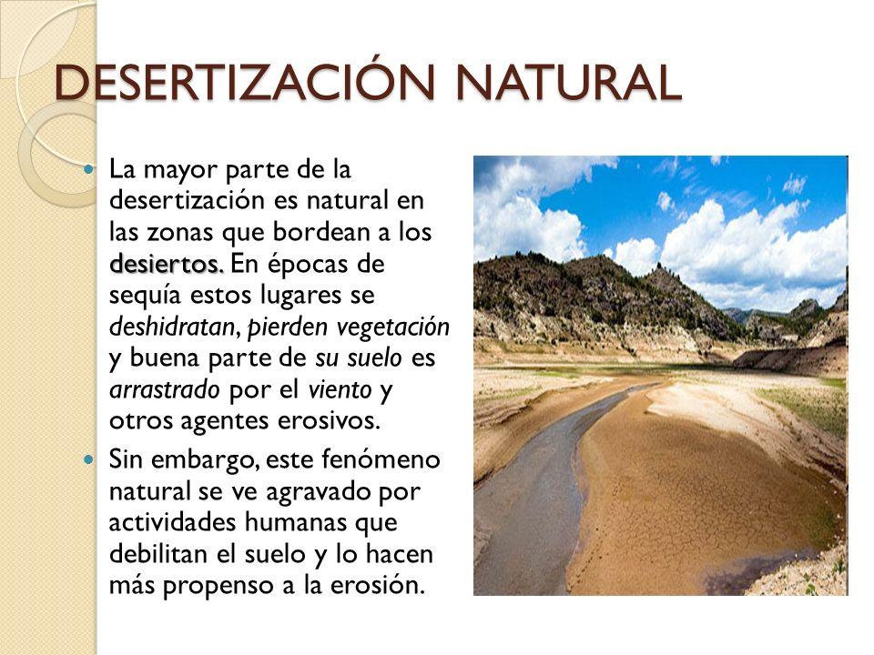 DESERTIZACIÓN NATURAL desiertos. La mayor parte de la desertización es natural en las zonas que bordean a los desiertos. En épocas de sequía estos lug