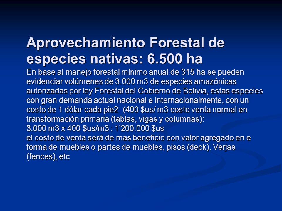 Aprovechamiento Forestal de especies nativas: 6.500 ha En base al manejo forestal mínimo anual de 315 ha se pueden evidenciar volúmenes de 3.000 m3 de