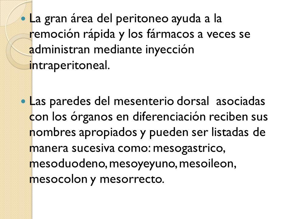 La gran área del peritoneo ayuda a la remoción rápida y los fármacos a veces se administran mediante inyección intraperitoneal. Las paredes del mesent