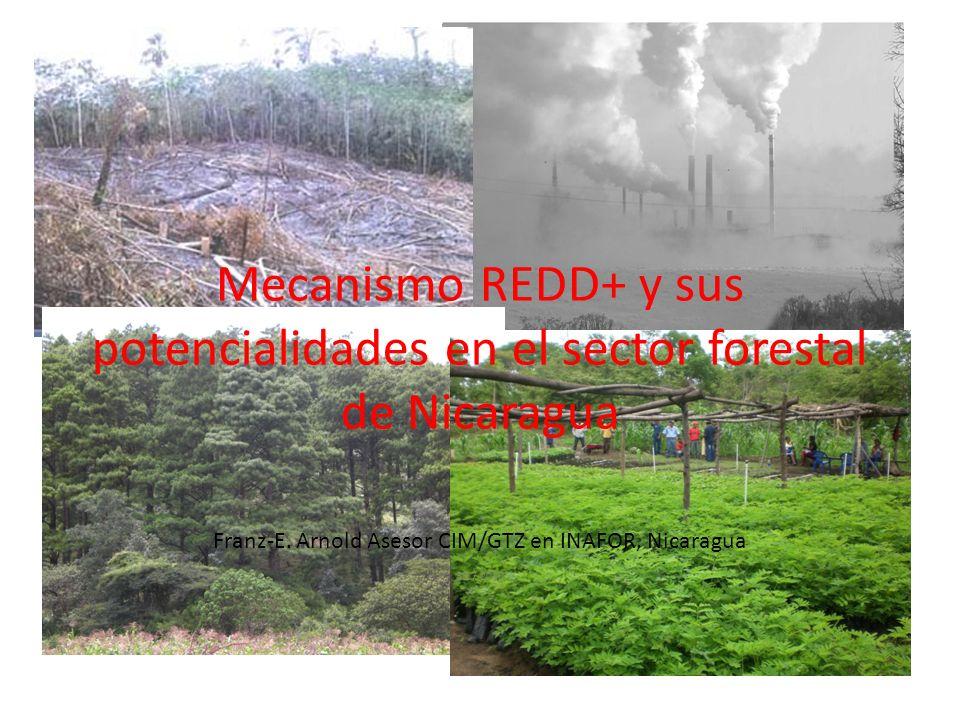 Franz-E. Arnold Asesor CIM/GTZ en INAFOR, Nicaragua 30.7.2010 Mecanismo REDD+ y sus potencialidades en el sector forestal de Nicaragua