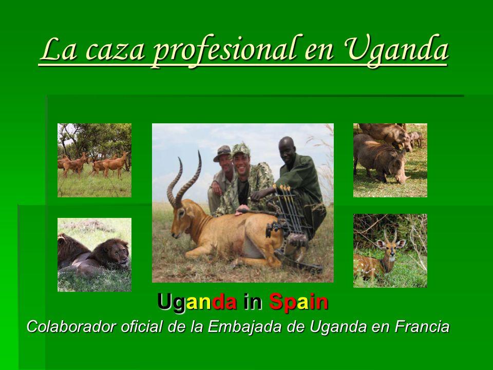 La caza profesional en Uganda Uganda in Spain Colaborador oficial de la Embajada de Uganda en Francia