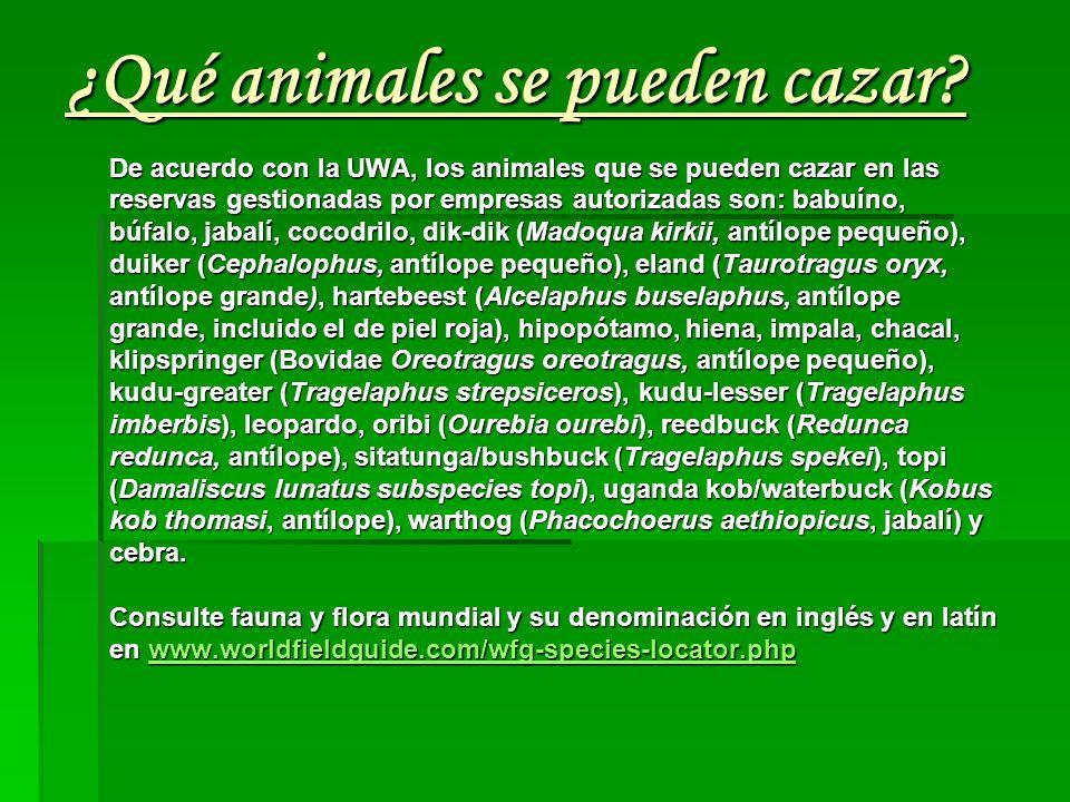 ¿Qué animales se pueden cazar? De acuerdo con la UWA, los animales que se pueden cazar en las reservas gestionadas por empresas autorizadas son: babuí
