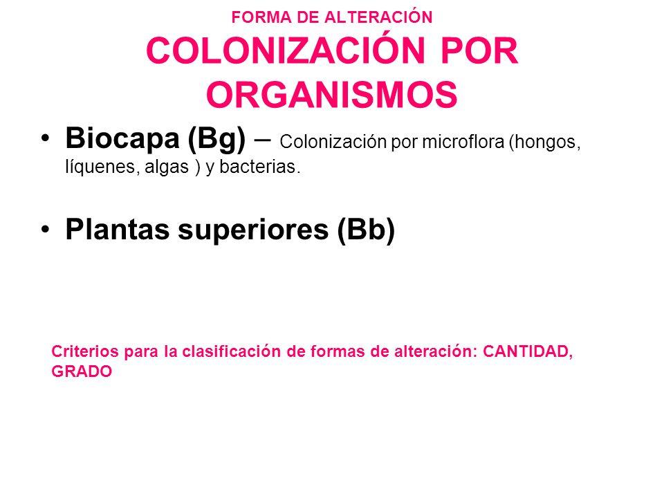 FORMA DE ALTERACIÓN COLONIZACIÓN POR ORGANISMOS Biocapa (Bg) – Colonización por microflora (hongos, líquenes, algas ) y bacterias. Plantas superiores