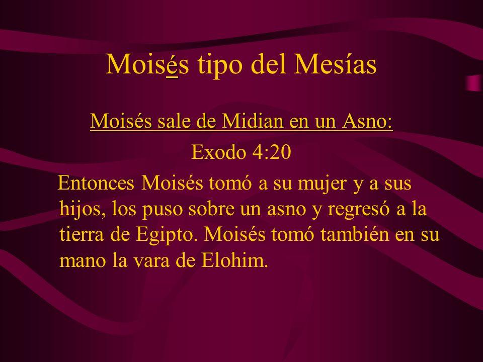 é Mois é s tipo del Mesías Moisés sale de Midian en un Asno: Exodo 4:20 Entonces Moisés tomó a su mujer y a sus hijos, los puso sobre un asno y regres