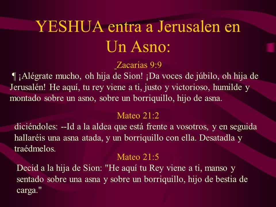 YESHUA entra a Jerusalen en Un Asno: Zacarias 9:9 ¶ ¡Alégrate mucho, oh hija de Sion! ¡Da voces de júbilo, oh hija de Jerusalén! He aquí, tu rey viene