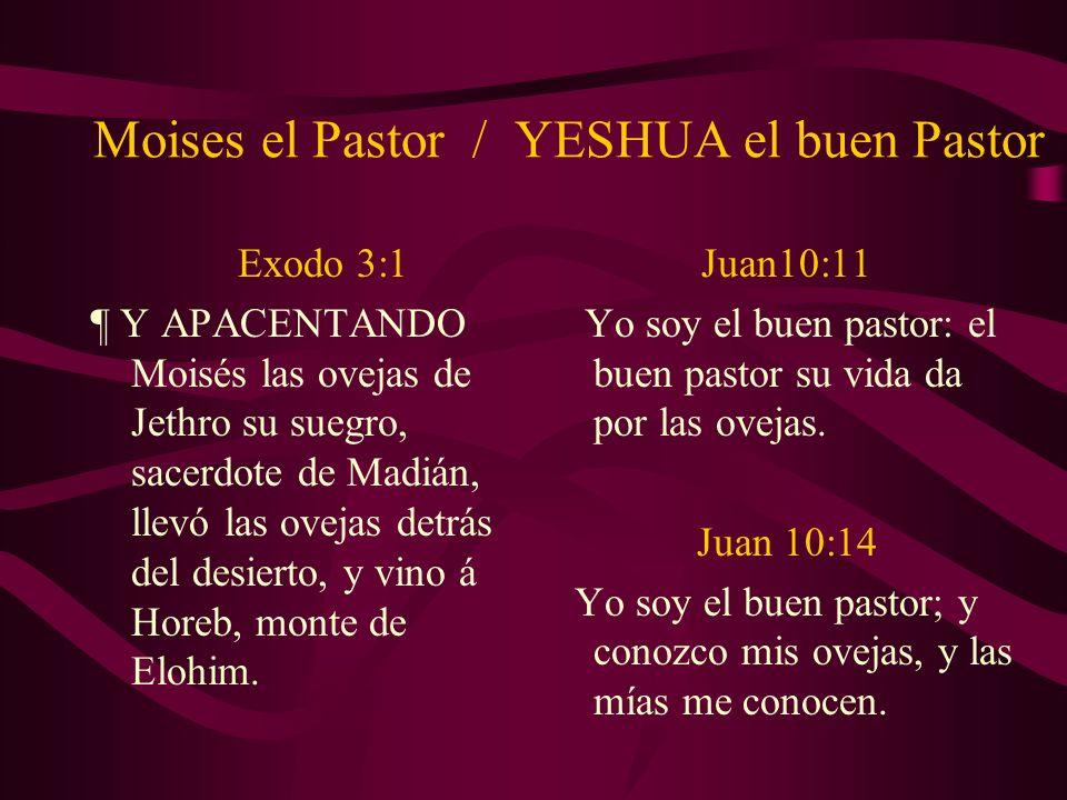 Moises el Pastor / YESHUA el buen Pastor Exodo 3:1 ¶ Y APACENTANDO Moisés las ovejas de Jethro su suegro, sacerdote de Madián, llevó las ovejas detrás