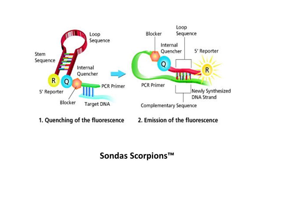 Sondas Scorpions