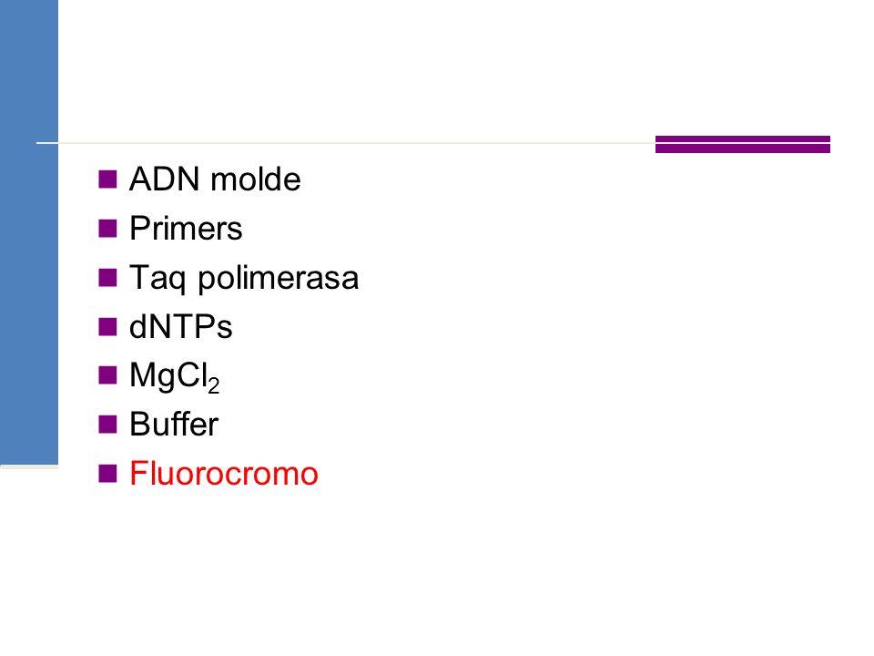 ADN molde Primers Taq polimerasa dNTPs MgCl 2 Buffer Fluorocromo