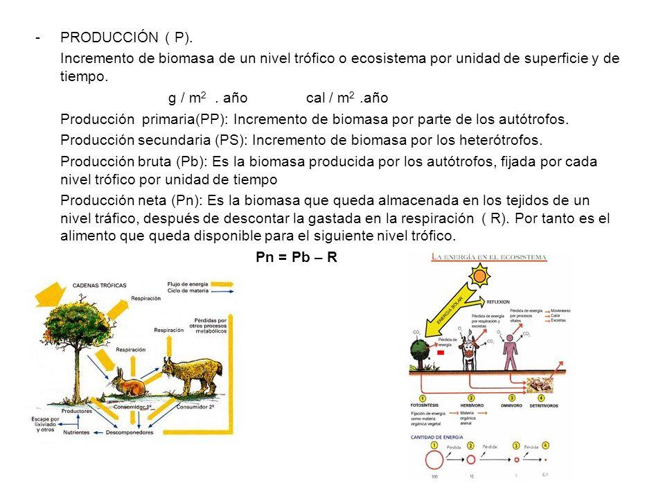 -PRODUCCIÓN ( P). Incremento de biomasa de un nivel trófico o ecosistema por unidad de superficie y de tiempo. g / m 2. año cal / m 2.año Producción p