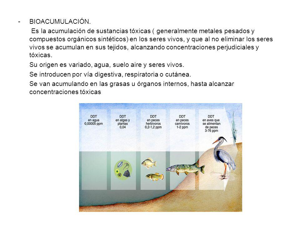-BIOACUMULACIÓN. Es la acumulación de sustancias tóxicas ( generalmente metales pesados y compuestos orgánicos sintéticos) en los seres vivos, y que a