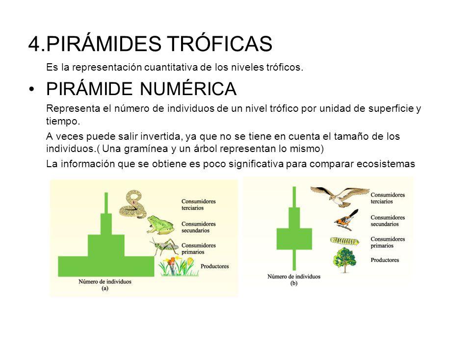 4.PIRÁMIDES TRÓFICAS Es la representación cuantitativa de los niveles tróficos. PIRÁMIDE NUMÉRICA Representa el número de individuos de un nivel trófi