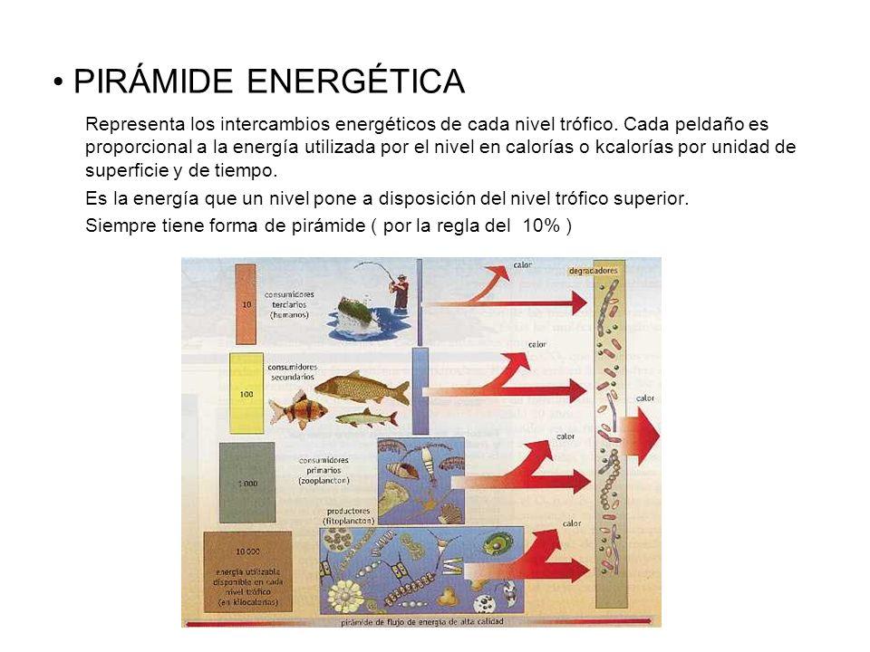PIRÁMIDE ENERGÉTICA Representa los intercambios energéticos de cada nivel trófico. Cada peldaño es proporcional a la energía utilizada por el nivel en