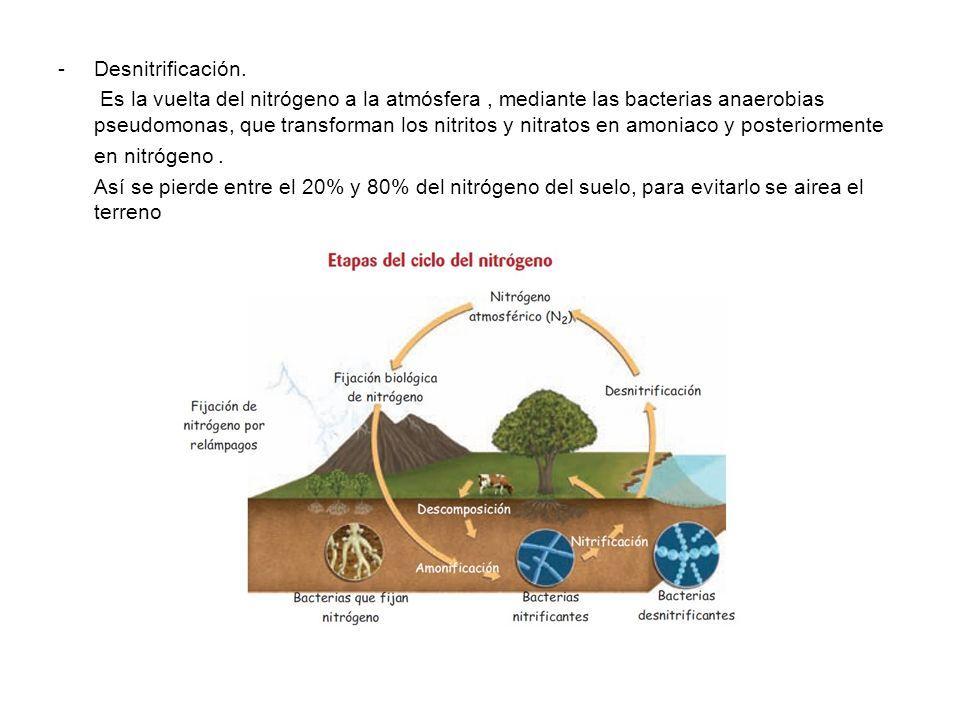 -Desnitrificación. Es la vuelta del nitrógeno a la atmósfera, mediante las bacterias anaerobias pseudomonas, que transforman los nitritos y nitratos e
