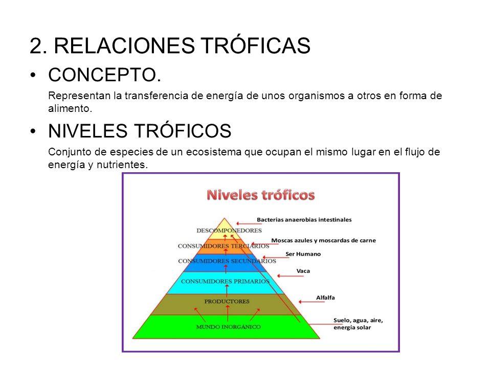 2. RELACIONES TRÓFICAS CONCEPTO. Representan la transferencia de energía de unos organismos a otros en forma de alimento. NIVELES TRÓFICOS Conjunto de