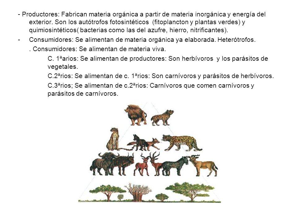 Detritívoros o saprobios: Se alimentan de residuos, excrementos o cadáveres que descomponen parcialmente.Necrófagos o carroñeros que se alimentan de cadáveres recientes( buitre, hiena, insectos).