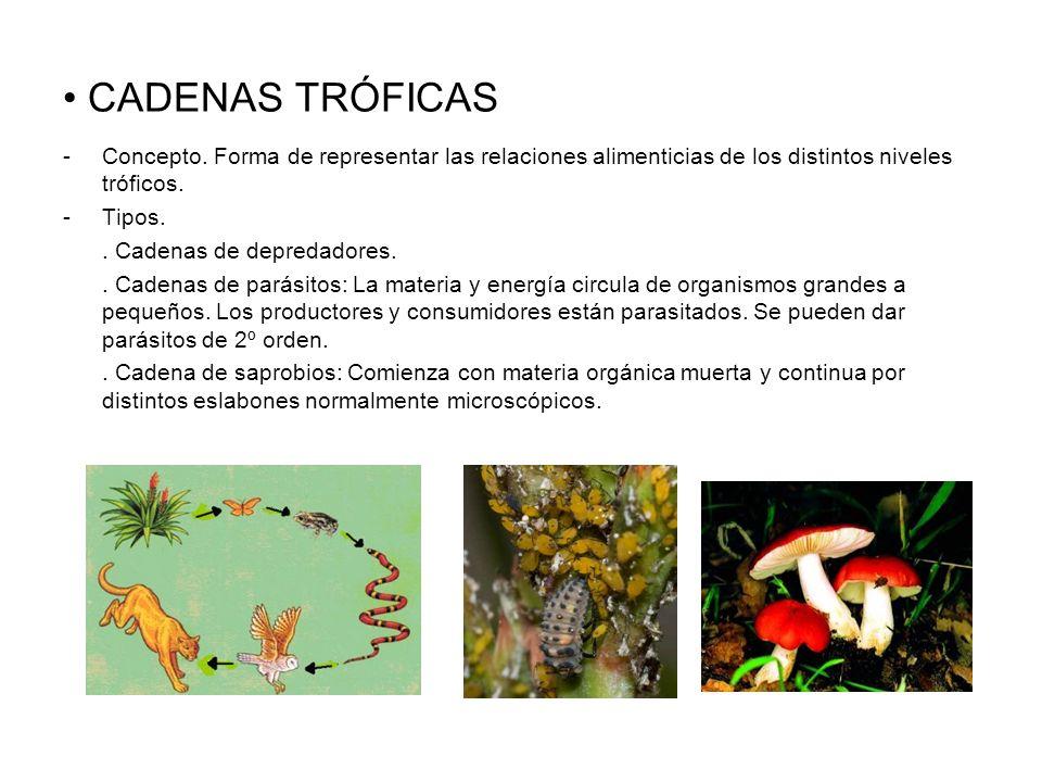 CADENAS TRÓFICAS -Concepto. Forma de representar las relaciones alimenticias de los distintos niveles tróficos. -Tipos.. Cadenas de depredadores.. Cad