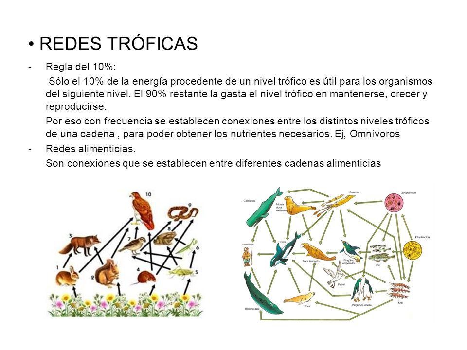 REDES TRÓFICAS -Regla del 10%: Sólo el 10% de la energía procedente de un nivel trófico es útil para los organismos del siguiente nivel. El 90% restan