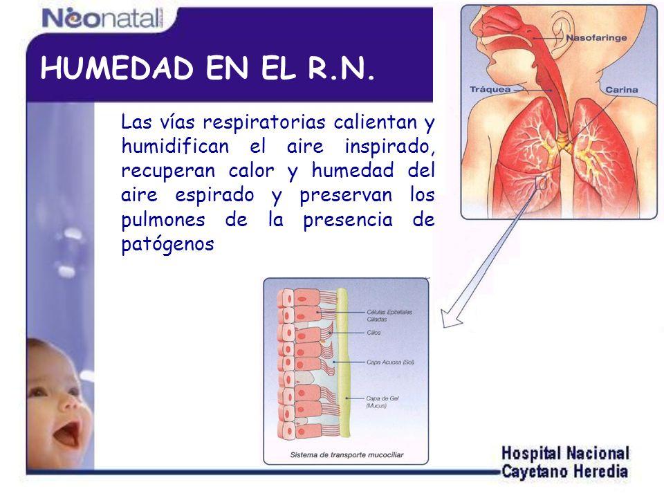 EL R.N.