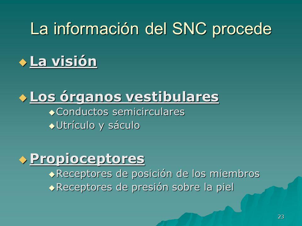 23 La información del SNC procede La visión La visión Los órganos vestibulares Los órganos vestibulares Conductos semicirculares Conductos semicircula