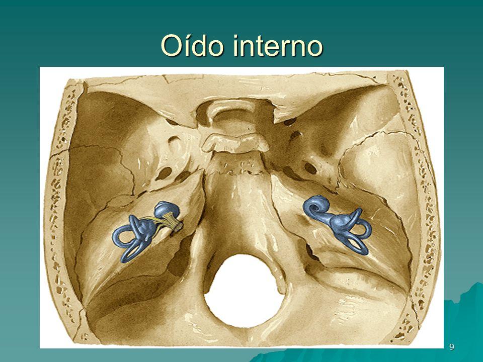 9 Oído interno