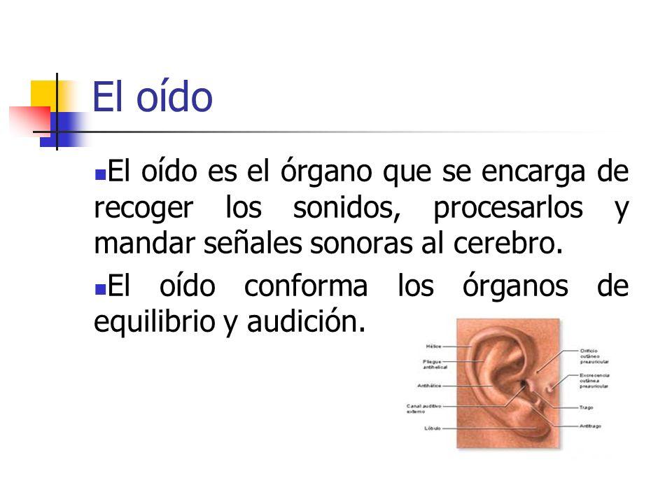 El oído El oído es el órgano que se encarga de recoger los sonidos, procesarlos y mandar señales sonoras al cerebro. El oído conforma los órganos de e