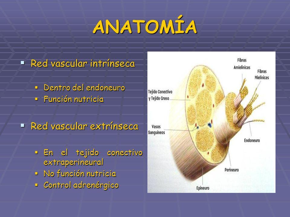 TIPOS DE LESIÓN NEUROAPRAXIA (CONTUSIÓN AXONAL) NEUROAPRAXIA (CONTUSIÓN AXONAL) Lesión nerviosa reversible Lesión nerviosa reversible En ENG disminución velocidad de conducción En ENG disminución velocidad de conducción AXONOTMESIS (INTERRUPCIÓN DEL AXÓN) AXONOTMESIS (INTERRUPCIÓN DEL AXÓN) NEUROTMESIS (INTERRUPCIÓN DEL FASCÍCULO) NEUROTMESIS (INTERRUPCIÓN DEL FASCÍCULO)