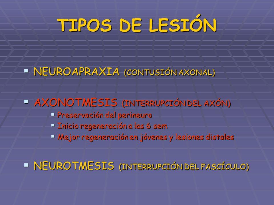 TIPOS DE LESIÓN NEUROAPRAXIA (CONTUSIÓN AXONAL) NEUROAPRAXIA (CONTUSIÓN AXONAL) AXONOTMESIS (INTERRUPCIÓN DEL AXÓN) AXONOTMESIS (INTERRUPCIÓN DEL AXÓN) NEUROTMESIS (INTERRUPCIÓN DEL FASCÍCULO) NEUROTMESIS (INTERRUPCIÓN DEL FASCÍCULO) Afectación completa de todo el soporte conectivo Afectación completa de todo el soporte conectivo Recuperación incompleta Recuperación incompleta