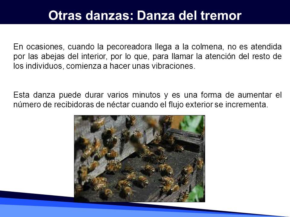 En ocasiones, cuando la pecoreadora llega a la colmena, no es atendida por las abejas del interior, por lo que, para llamar la atención del resto de l