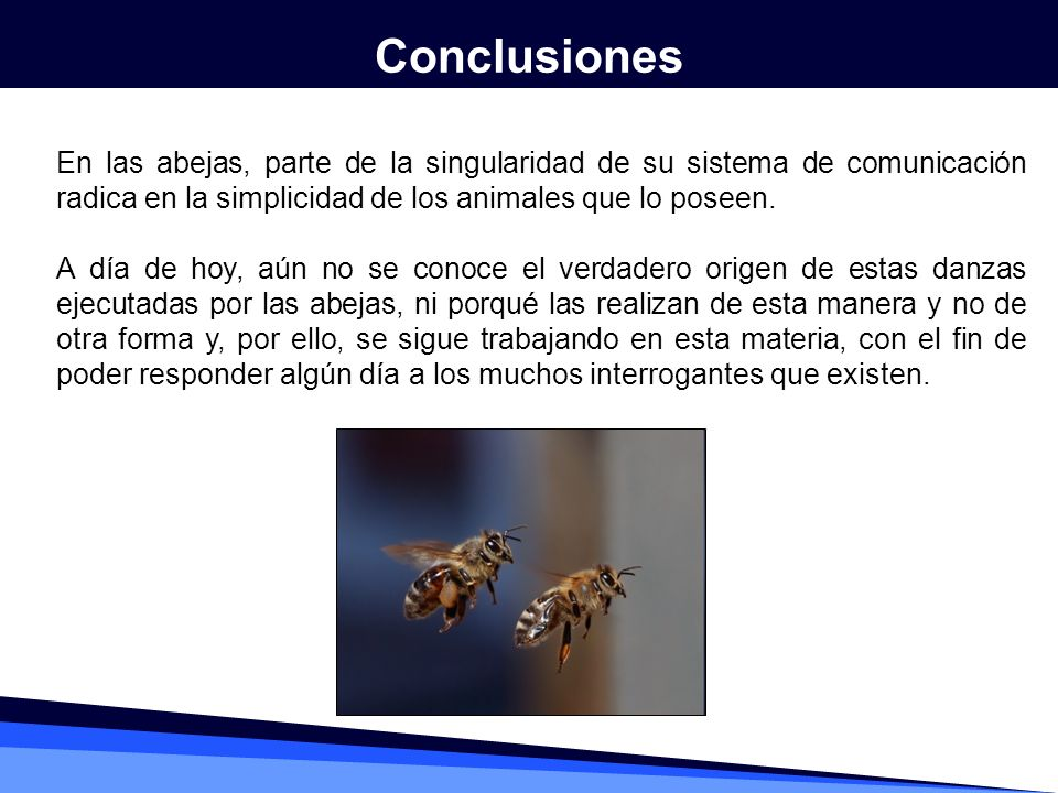 En las abejas, parte de la singularidad de su sistema de comunicación radica en la simplicidad de los animales que lo poseen. A día de hoy, aún no se