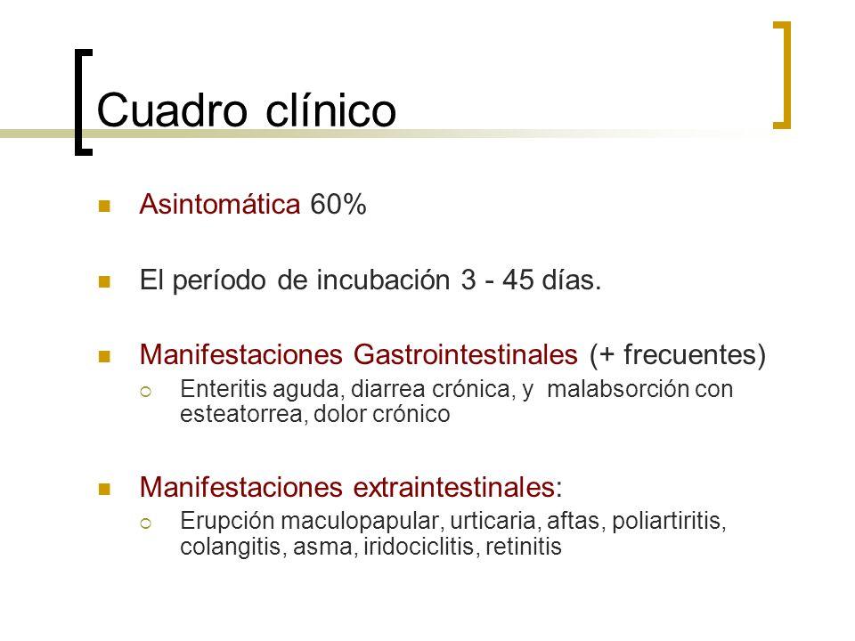 Cuadro clínico Asintomática 60% El período de incubación 3 - 45 días. Manifestaciones Gastrointestinales (+ frecuentes) Enteritis aguda, diarrea cróni