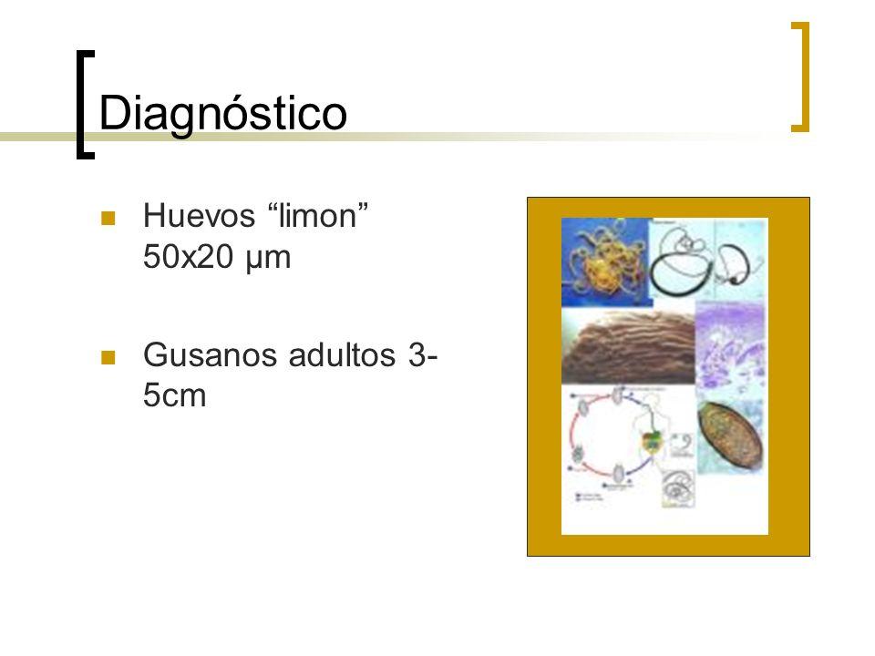 Diagnóstico Huevos limon 50x20 μm Gusanos adultos 3- 5cm