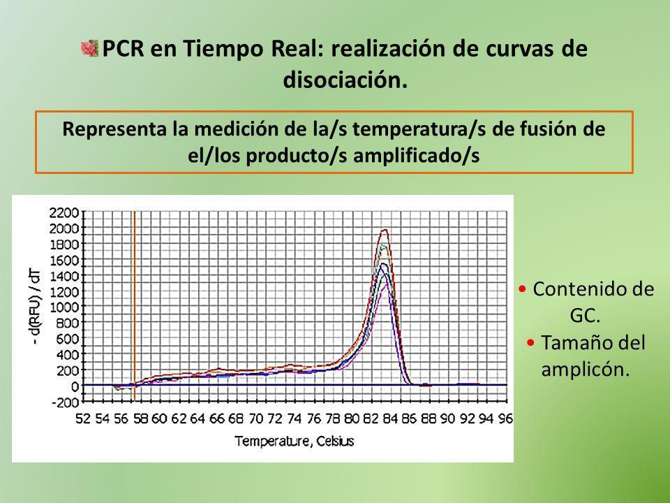 PCR en Tiempo Real: realización de curvas de disociación. Representa la medición de la/s temperatura/s de fusión de el/los producto/s amplificado/s Co