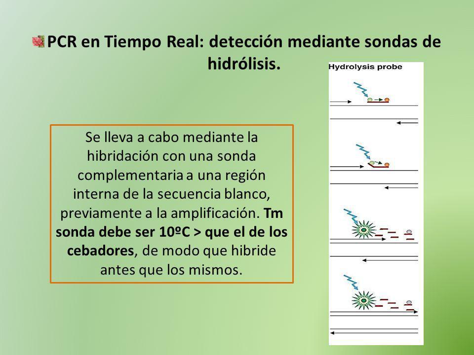 PCR en Tiempo Real: detección mediante sondas de hidrólisis. Se lleva a cabo mediante la hibridación con una sonda complementaria a una región interna