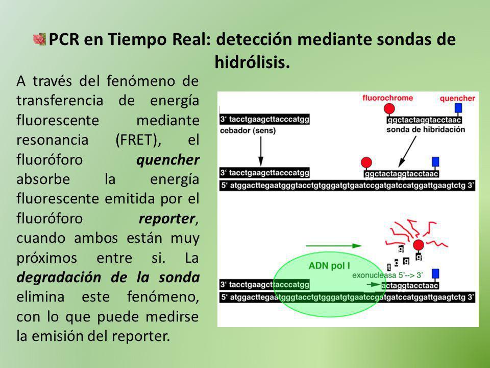PCR en Tiempo Real: detección mediante sondas de hidrólisis. A través del fenómeno de transferencia de energía fluorescente mediante resonancia (FRET)
