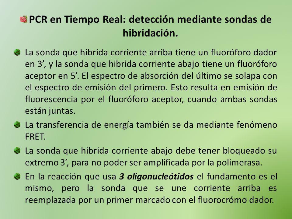 PCR en Tiempo Real: detección mediante sondas de hibridación. La sonda que hibrida corriente arriba tiene un fluoróforo dador en 3, y la sonda que hib