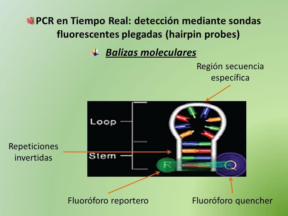 PCR en Tiempo Real: detección mediante sondas fluorescentes plegadas (hairpin probes) Balizas moleculares Región secuencia específica Repeticiones inv