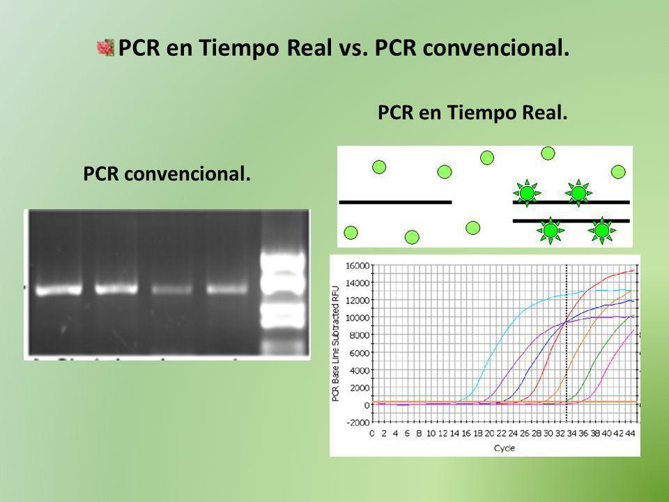 PCR en Tiempo Real: cálculo de la eficiencia de reacción.