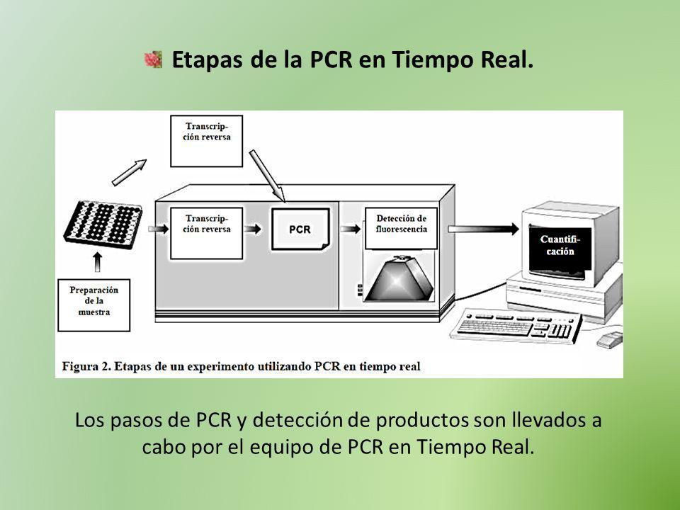 Etapas de la PCR en Tiempo Real. Los pasos de PCR y detección de productos son llevados a cabo por el equipo de PCR en Tiempo Real.