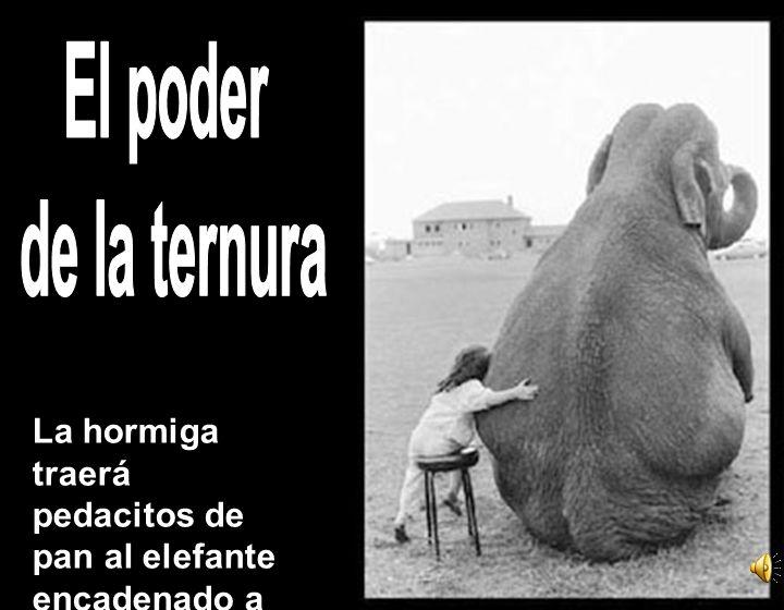 La hormiga traerá pedacitos de pan al elefante encadenado a su brutal delicadeza (Cesar Vallejo)