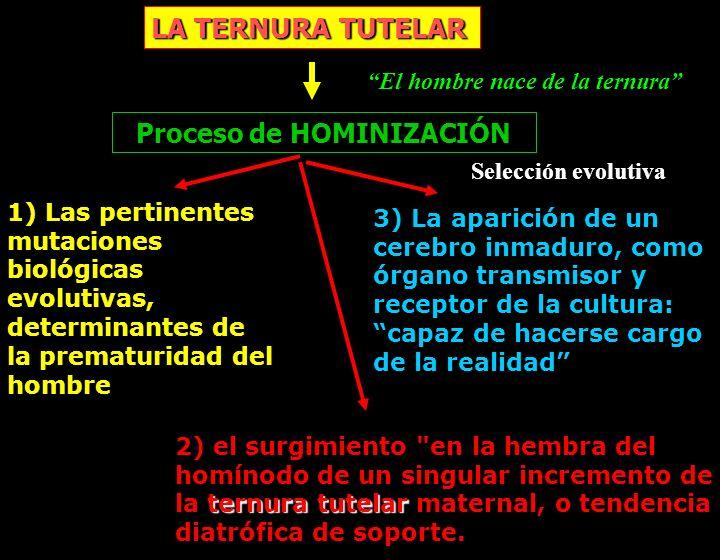 LA TERNURA TUTELAR Proceso de HOMINIZACIÓN 1) Las pertinentes mutaciones biológicas evolutivas, determinantes de la prematuridad del hombre ternura tu