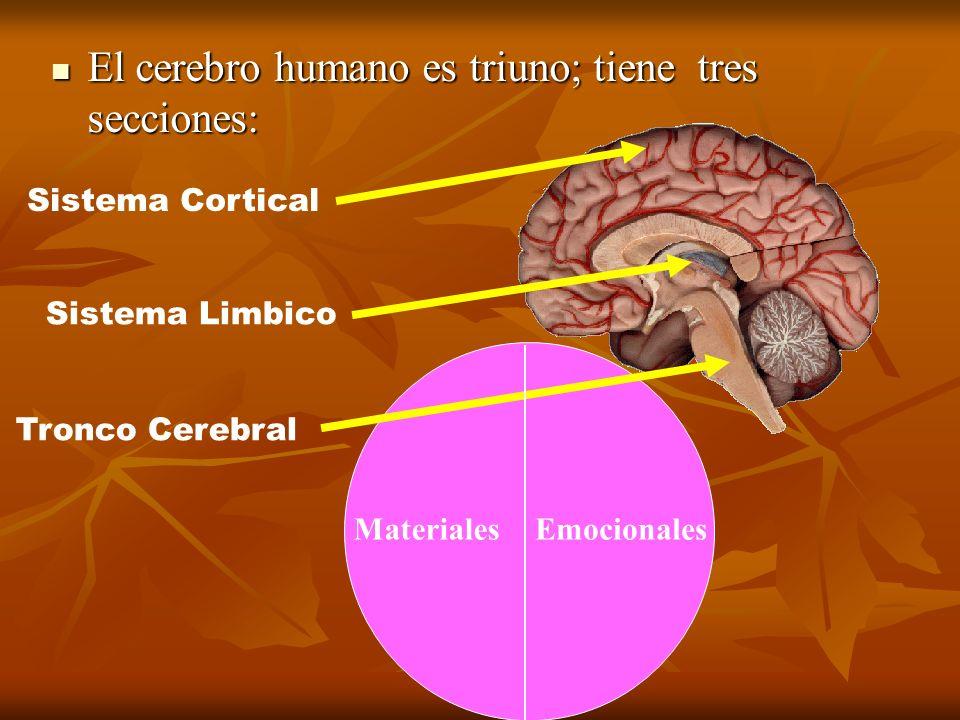 El cerebro humano es triuno; tiene tres secciones: El cerebro humano es triuno; tiene tres secciones: Tronco Cerebral Sistema Limbico Sistema Cortical