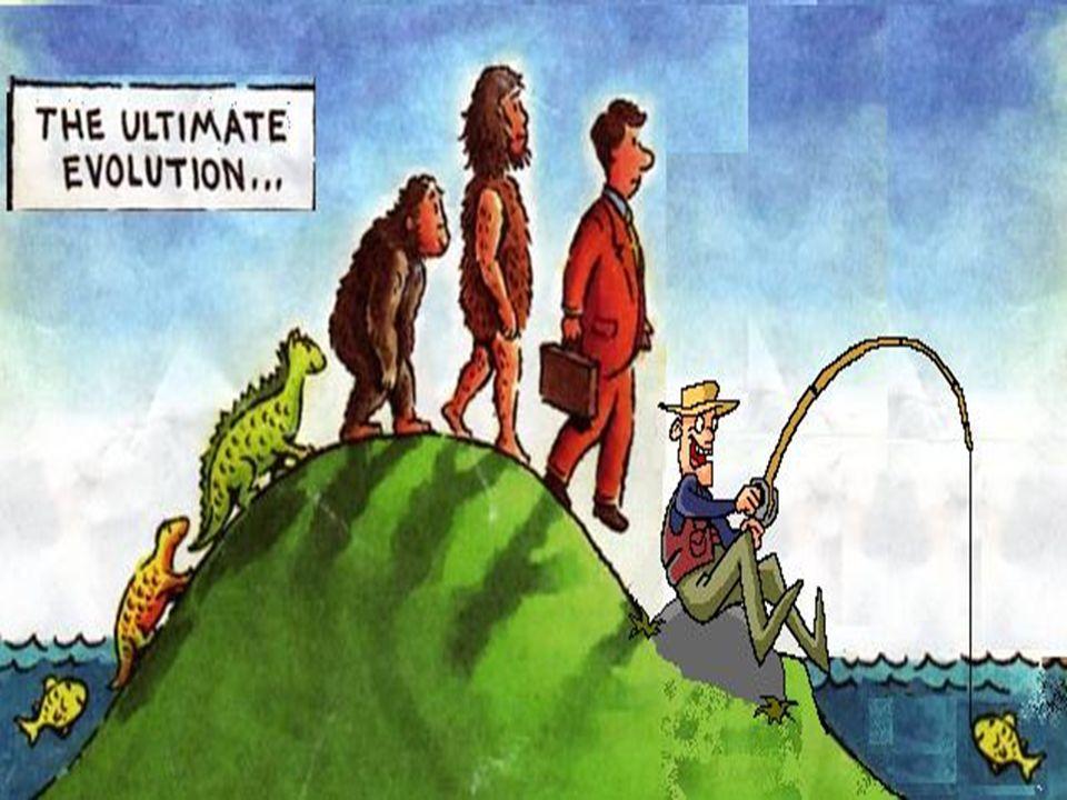 TEORIA 2: EVOLUCION TEISTA Esta posición mantiene que Dios usó el mecanismo de la Evolución para la Creación del Universo y el ser humano.