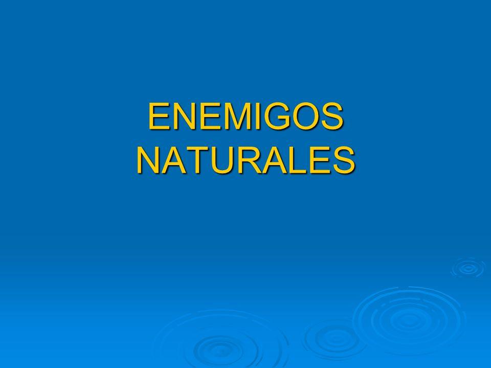 ENEMIGOS NATURALES
