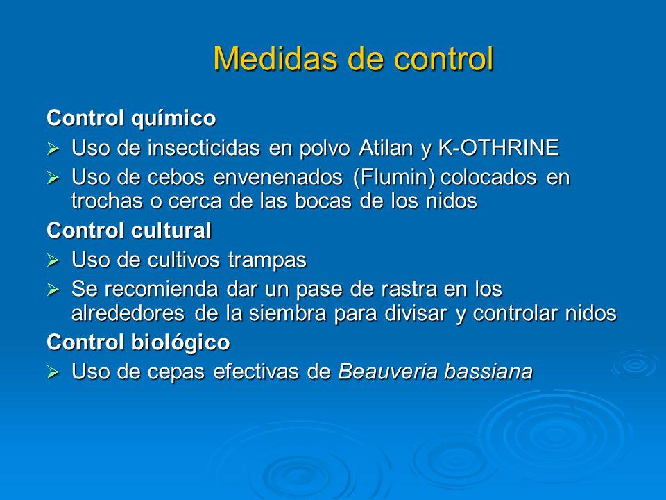 Medidas de control Control cultural: Construir refugios en los campos promover el anidado de avispas depredadoras, Polistes sp.