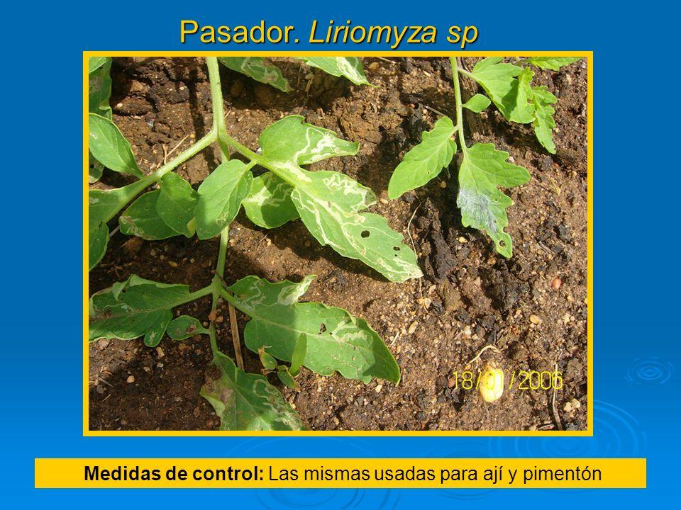 Pasador. Liriomyza sp Medidas de control: Las mismas usadas para ají y pimentón