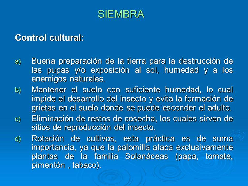SIEMBRA Control cultural: a) Buena preparación de la tierra para la destrucción de las pupas y/o exposición al sol, humedad y a los enemigos naturales