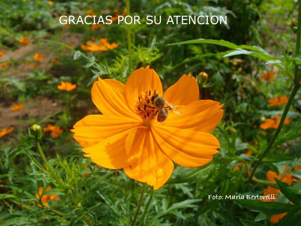GRACIAS POR SU ATENCION Foto: María Bertorelli