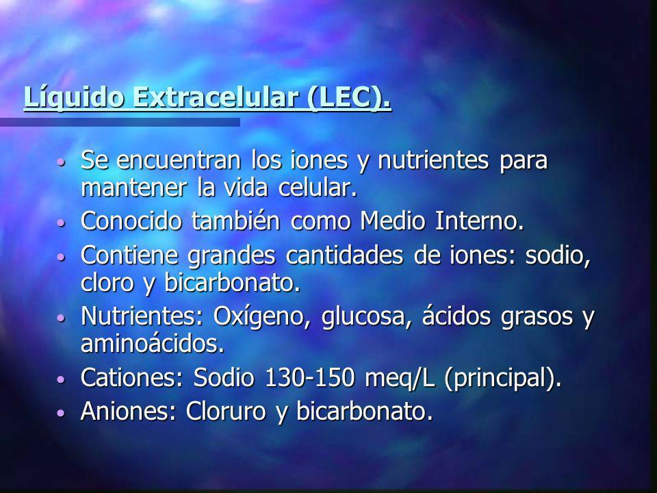 Líquido Extracelular (LEC). Se encuentran los iones y nutrientes para mantener la vida celular. Se encuentran los iones y nutrientes para mantener la