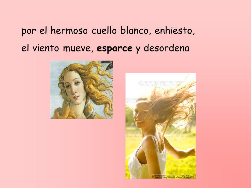 por el hermoso cuello blanco, enhiesto, el viento mueve, esparce y desordena