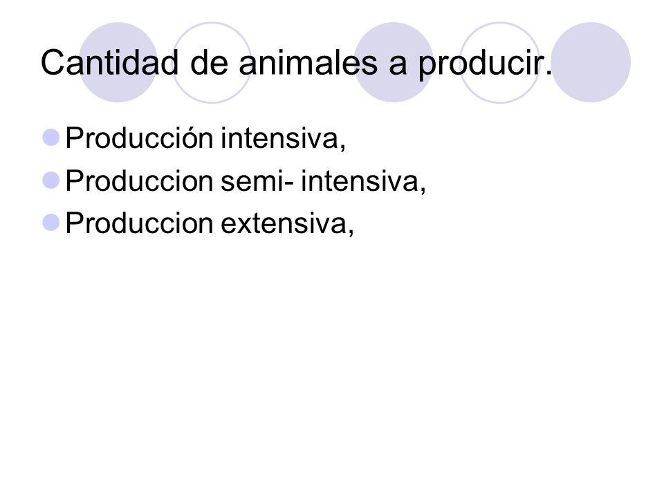 Cantidad de animales a producir. Producción intensiva, Produccion semi- intensiva, Produccion extensiva,